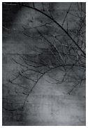 16:37 - 2017 - afdruk op Hahnemühle  Fine Art  Paper Framed 80 x 120 cm  ed. 1/5