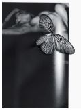 Butterfly on ss - 2017 - afdruk op Hahnemühle  Fine Art  Paper Framed 32 x 40 cm  ed. 1/5  Interesse? Contacteer ons